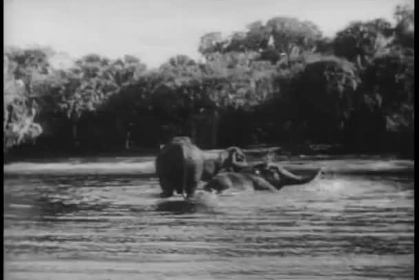 Tiro largo elefantes bañándose en el río — Vídeo de stock