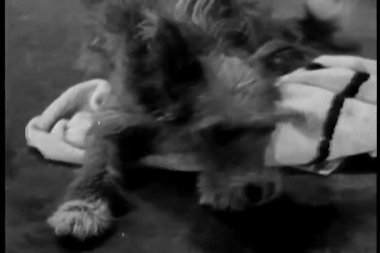 Dog lying on  towel — Video Stock