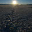 Stock Photo: Salinas Grandes in Argentina