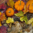 Autumn scene with pumpkins - Stock Photo