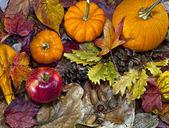 Autumn scene with pumpkins — Stock Photo