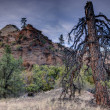 Stock Photo: Zion National Park lignhtning struck tree
