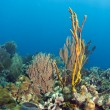 Coral reef yellow rope sponge - Stock Photo