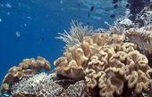 Arrecife de coral del pacífico sur — Foto de Stock