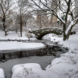 Stock Photo: Central Park, New York City