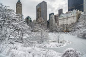 Central Park winter — Stock Photo