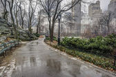 Central Park, New York City after rain storm — Foto Stock