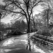 Stock Photo: Central Park, New York City after rain storm
