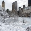 Central Park, New York City winter — Stock Photo #23545785
