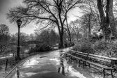 Central Park, New York City after rain storm — Stock fotografie