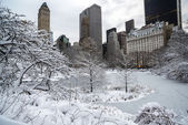 Central Park, New York City winter — Stock fotografie
