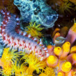 Bearded fireworm, Hermodice carunculata — Stock Photo