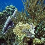 Underwater coral reef purple tube sponge — Stock Photo #29756569