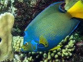 Underwater coral reef — Stockfoto