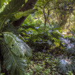 Tropical rainforest — Stock Photo