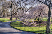 Central Park, New York City spring — Stock Photo