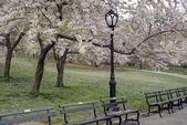 Central Park, New York City spring — Stock Photo