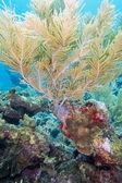 Sea plumes — Stock Photo