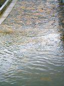 Waters Edge — Stock Photo