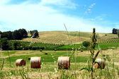 Hay field — Stock Photo
