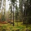 Forest in Scotland — Stock Photo #13129113