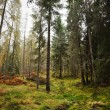 Stock Photo: Forest in Scotland