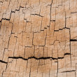 Stock Photo: Tree ring texture