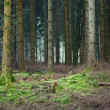 Stock Photo: Forest clearing