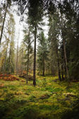 Forest in Scotland — Foto Stock