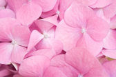 Pink petals detail — Stock Photo