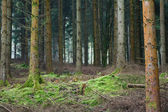 Forest clearing — Stock Photo