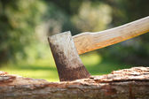 Axe in wood — Stock Photo