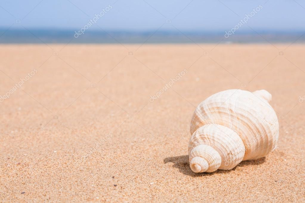 Seashell on a beach with blue sky and space for text  Stock Photo #13129404