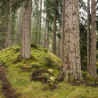 Forest path — Stock Photo #13203525