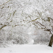 Stock Photo: Woodland snow scene