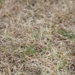 Stock Photo: Dead grass