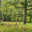 Stock Photo: Woodland scene