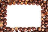 Conker border — Stock Photo