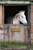 Horse in stable — Stock Photo