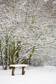 Bench and woods in snow — Stock Photo