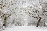 Woodland snow scene — Stock Photo