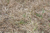 Dead grass — Stock Photo