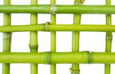 Bambus wzór — Zdjęcie stockowe
