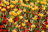Red and yellow flowers — Stockfoto