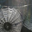 Spider webs — Stock Photo