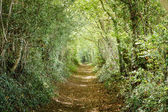 Tree lined path — Stockfoto