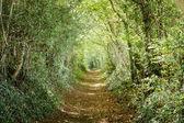 绿树成荫的路径 — 图库照片