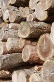 Log stack — Stock Photo