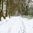 Woodland in snow — Stockfoto