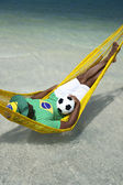 Brazilian Soccer Player Relaxes in Beach Hammock — Stock Photo